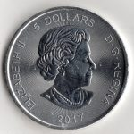 canadian_silver_cougar_back